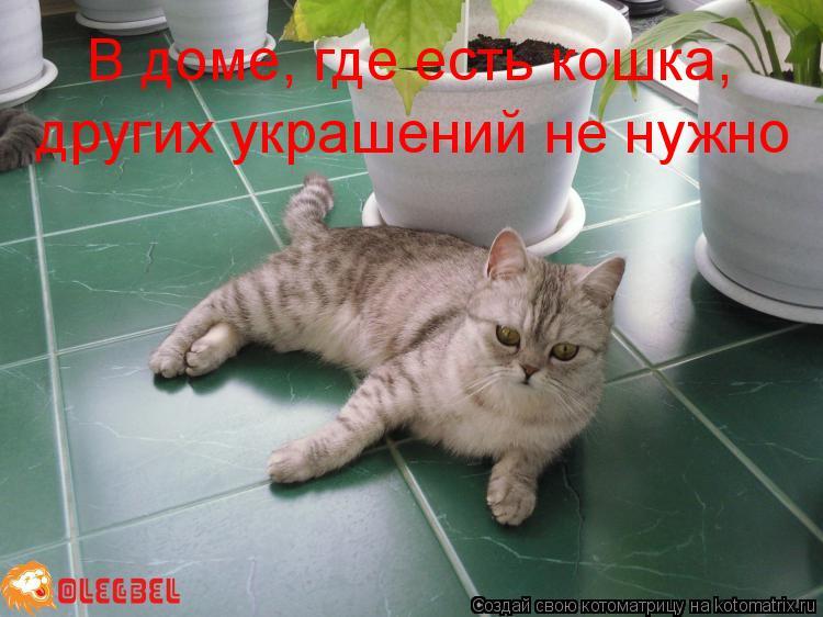 Котоматрица: В доме, где есть кошка, других украшений не нужно