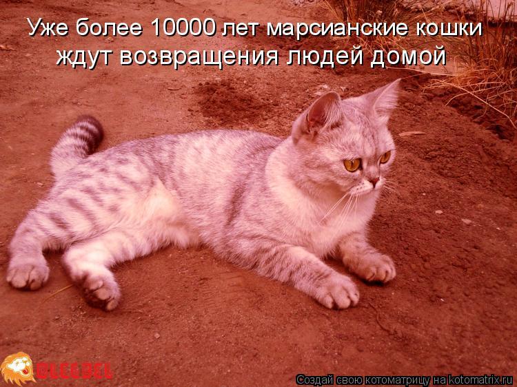 Котоматрица: Уже более 10000 лет марсианские кошки ждут возвращения людей домой