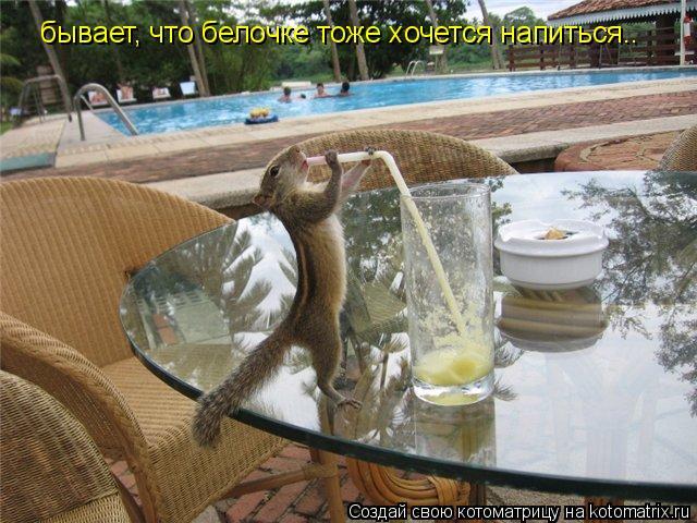Котоматрица: бывает, что белочке тоже хочется напиться..