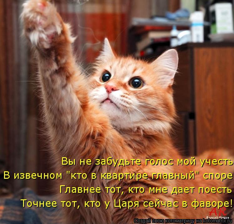 """Котоматрица: Главнее тот, кто мне дает поесть Вы не забудьте голос мой учесть В извечном """"кто в квартире главный"""" споре Точнее тот, кто у Царя сейчас в фав"""