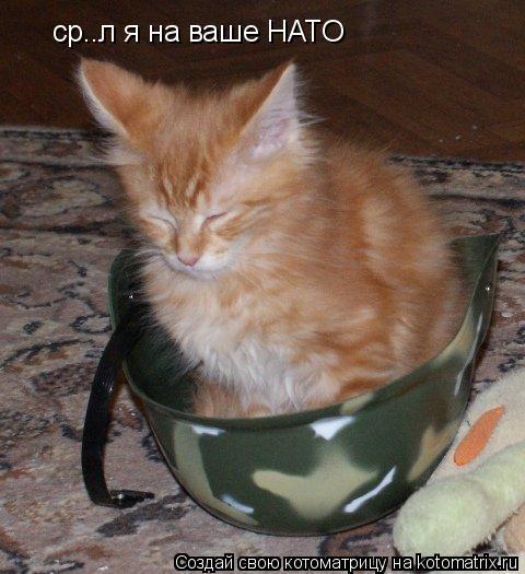 Котоматрица: ср..л я на ваше НАТО