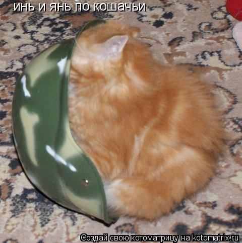 Котоматрица: инь и янь по кошачьи