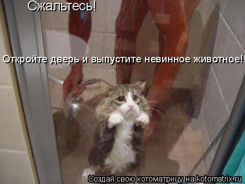 Котоматрица: Сжальтесь!  Откройте дверь и выпустите невинное животное!!!