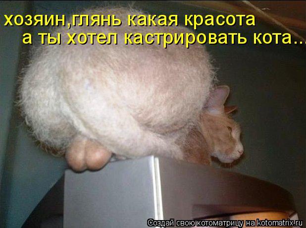 Котоматрица: а ты хотел кастрировать кота... хозяин,глянь какая красота