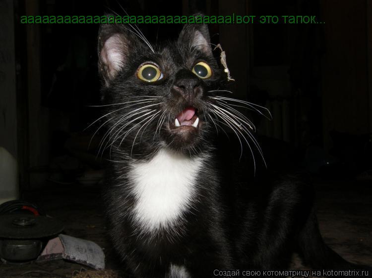 Котоматрица: ааааааааааааааааааааааааааааа!вот это тапок...