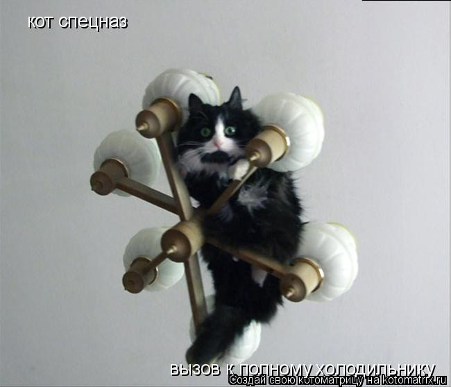 Котоматрица: кот спецназ вызов к полному холодильнику