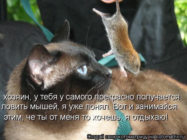 Котоматрица: хозяин, у тебя у самого прекрасно получается ловить мышей, я уже понял. Вот и занимайся этим, че ты от меня то хочешь, я отдыхаю!