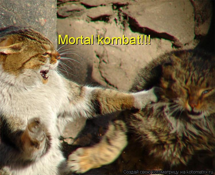 Котоматрица: Mortal kombat!!!