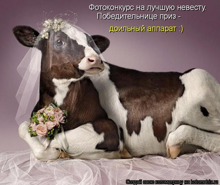 Котоматрица: Фотоконкурс на лучшую невесту. Победительнице приз - доильный аппарат :)