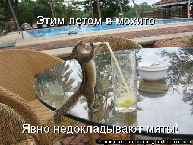 Котоматрица: Этим летом в мохито Явно недокладывают мяты!