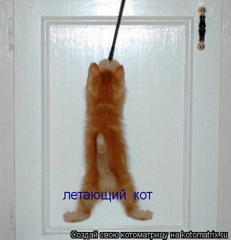 Котоматрица: летающий  кот