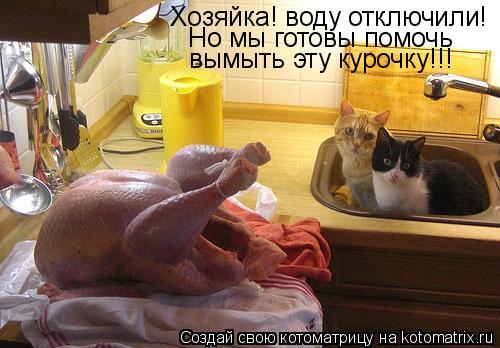 Котоматрица: Хозяйка! воду отключили! Но мы готовы помочь вымыть эту курочку!!!