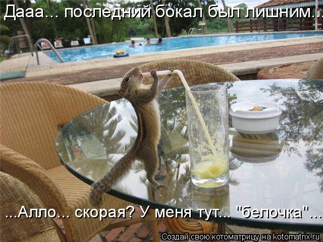 "Котоматрица: Дааа... последний бокал был лишним... ...Алло... скорая? У меня тут... ""белочка""..."
