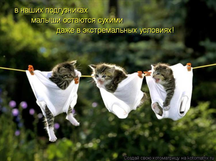http://kotomatrix.ru/images/lolz/2010/02/15/488466.jpg