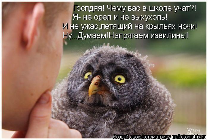 Котоматрица: Госпдяя! Чему вас в школе учат?! Я- не орел и не выхухоль! И не ужас,летящий на крыльях ночи! Ну...Думаем!Напрягаем извилины!