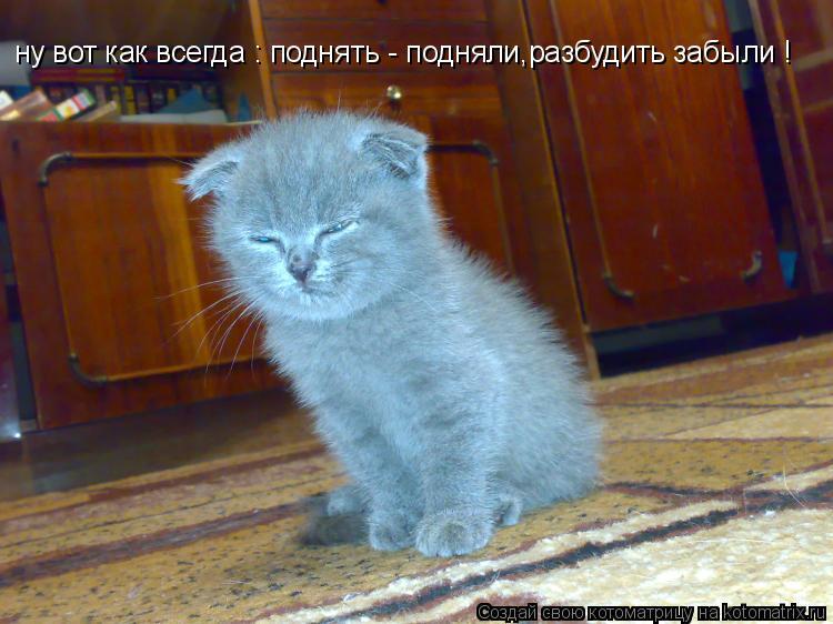 Котоматрица: ну вот как всегда : поднять - подняли,разбудить забыли !