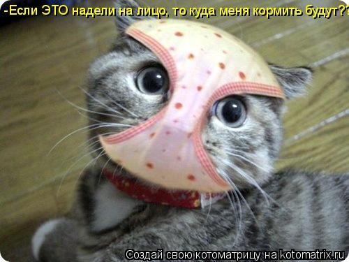 Котоматрица: -Если ЭТО надели на лицо, то куда меня кормить будут???