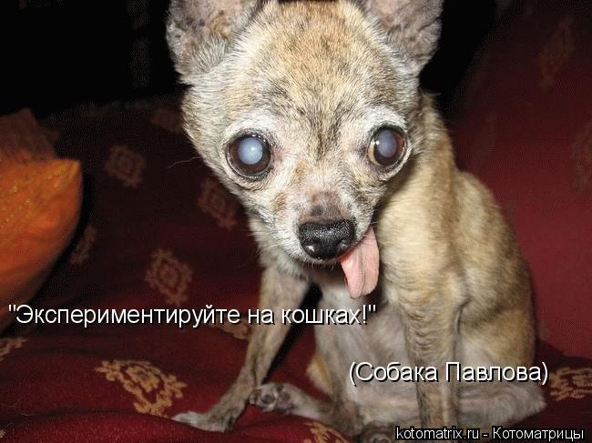 "Котоматрица: ""Экспериментируйте на кошках!"" (Собака Павлова)"