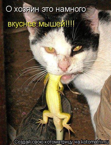 Котоматрица: О хозяин это намного вкуснее мышей!!!!