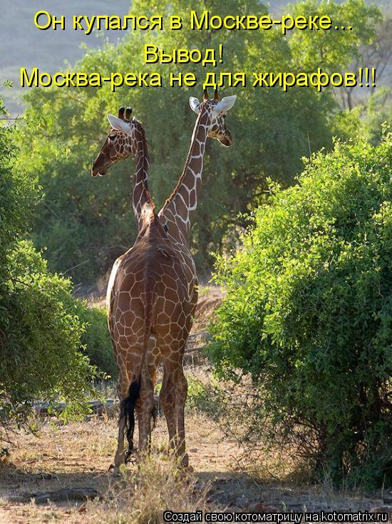 Котоматрица: Он купался в Москве-реке... Вывод! Москва-река не для жирафов!!!