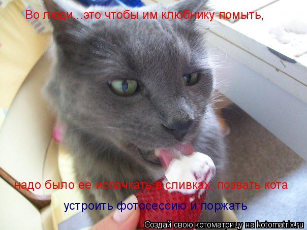 Котоматрица: Во люди...это чтобы им клюбнику помыть,  надо было ее испачкать в сливках, позвать кота  устроить фотосессию и поржать