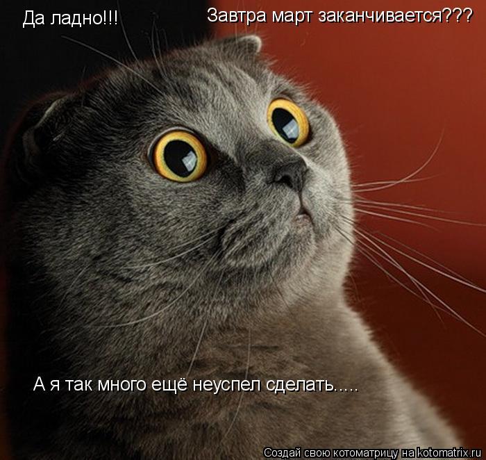 Котоматрица: Да ладно!!!             Завтра март заканчивается???        А я так много ещё неуспел сделать.....