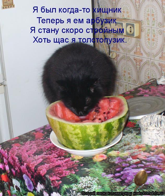 Котоматрица: Я был когда-то хищник Теперь я ем арбузик Я стану скоро стройным Хоть щас я толстопузик.