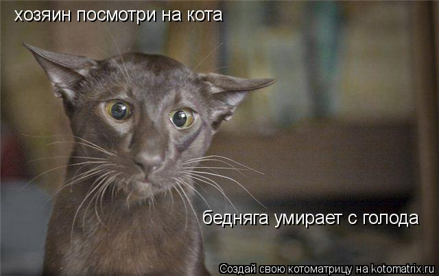 Котоматрица: хозяин посмотри на кота бедняга умирает с голода