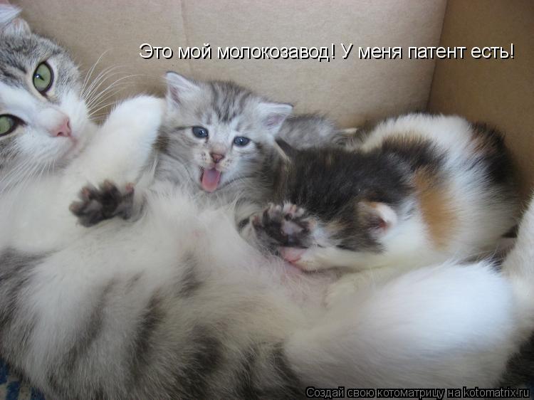 Котоматрица: Это мой молокозавод! У меня патент есть!