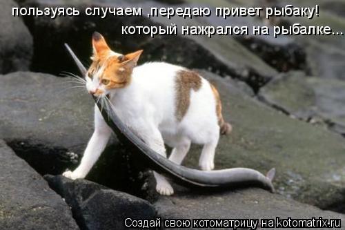Котоматрица: пользуясь случаем ,передаю привет рыбаку! который нажрался на рыбалке...