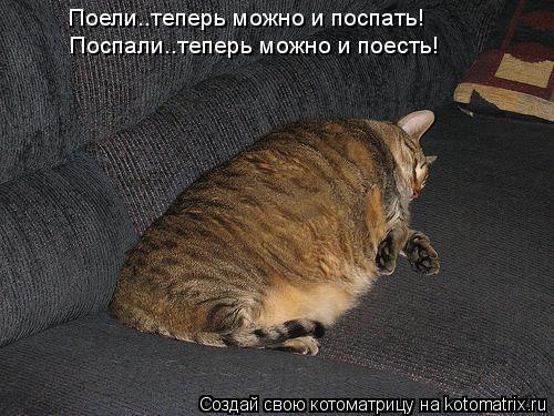 Котоматрица: Поели..теперь можно и поспать! Поспали..теперь можно и поесть!