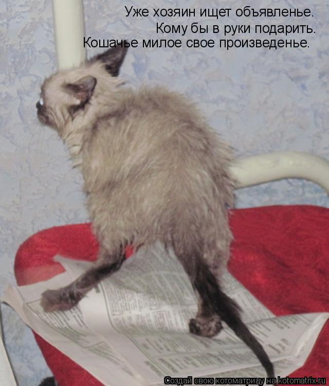 Котоматрица: Уже хозяин ищет объявленье.  Кому бы в руки подарить.  Кошачье милое свое произведенье.