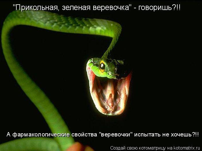 """Котоматрица: """"Прикольная, зеленая веревочка"""" - говоришь?!! А фармакологические свойства """"веревочки"""" испытать не хочешь?!!"""