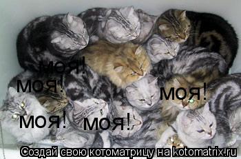 Котоматрица: моя! моя! моя! моя! моя!