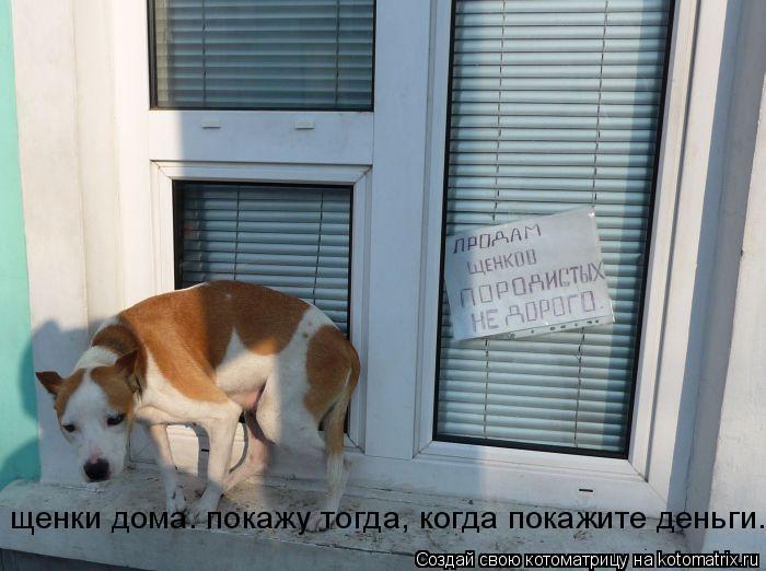 Котоматрица: щенки дома. покажу тогда, когда покажите деньги.