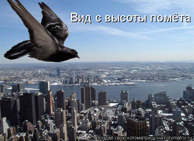 Котоматрица: Вид с высоты помёта