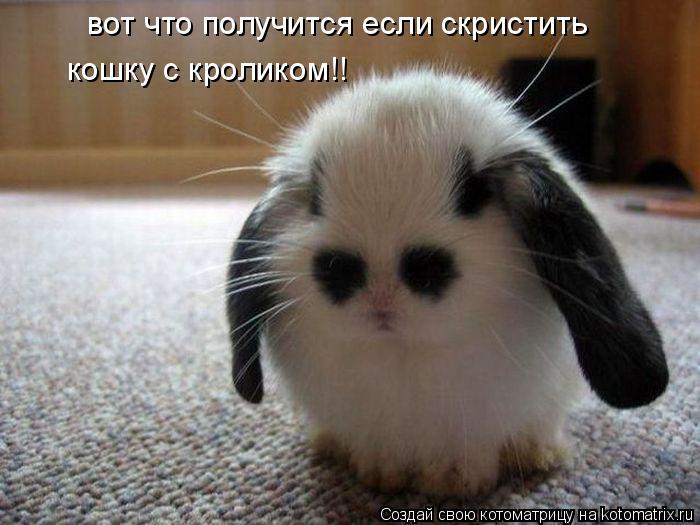 Котоматрица: вот что получится если скристить кошку с кроликом!!