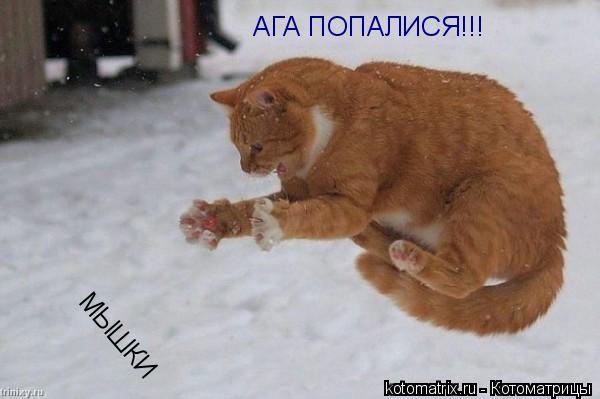 Котоматрица: АГА ПОПАЛИСЯ!!! МЫШКИ