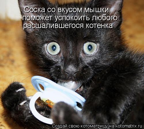 Котоматрица: Соска со вкусом мышки поможет успокоить любого расшалившегося котенка