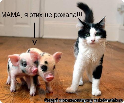 Котоматрица: МАМА, я этих не рожала!!! > |