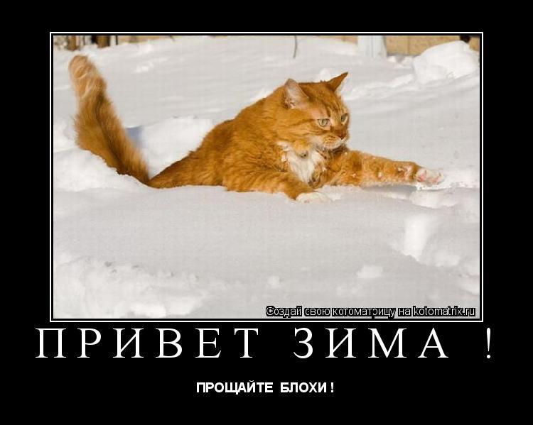 Котоматрица: привет зима ! ПРОЩАЙТЕ  БЛОХИ !