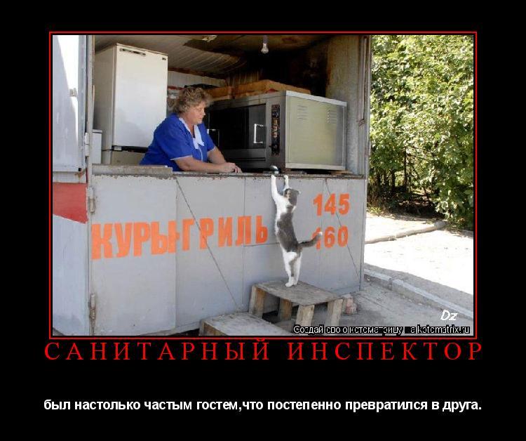 Котоматрица: санитарный инспектор был настолько частым гостем,что постепенно превратился в друга.