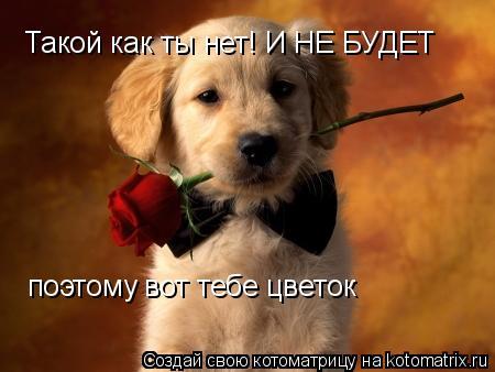 Котоматрица: Такой как ты нет! И НЕ БУДЕТ поэтому вот тебе цветок
