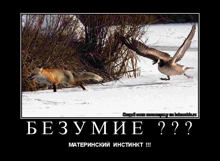 Котоматрица: безумие ??? МАТЕРИНСКИЙ  ИНСТИНКТ  !!!