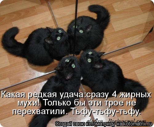 Котоматрица: Какая редкая удача:сразу 4 жирных  мухи! Только бы эти трое не  перехватили. Тьфу-тьфу-тьфу.