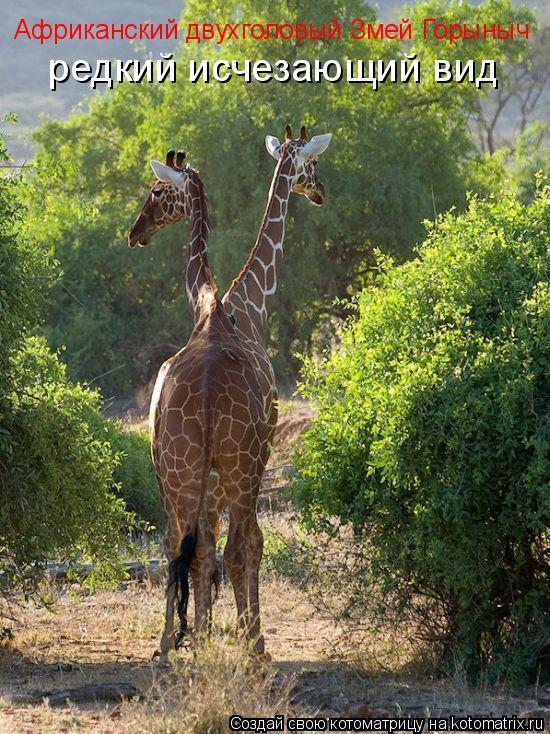 Котоматрица: Африканский двухголовый Змей Горыныч редкий исчезающий вид