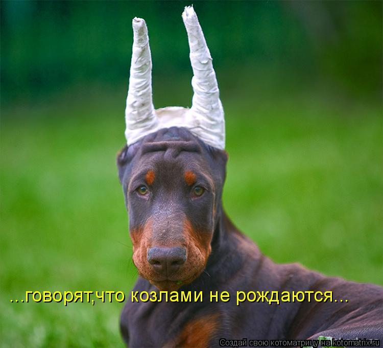 Котоматрица: ...говорят,что козлами не рождаются...