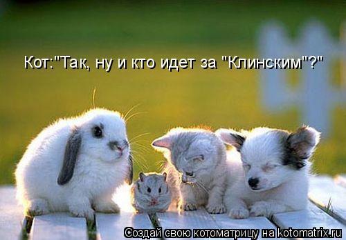 "Котоматрица: Кот:""Так, ну и кто идет за ""Клинским""?"""