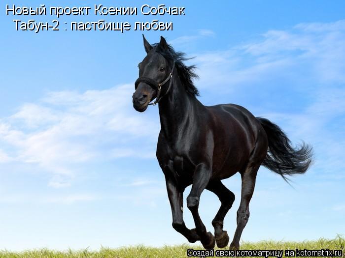 Котоматрица: Новый проект Ксении Собчак Табун-2 : пастбище любви