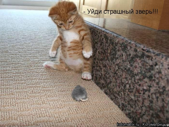 Котоматрица: - Уйди страшный зверь!!!